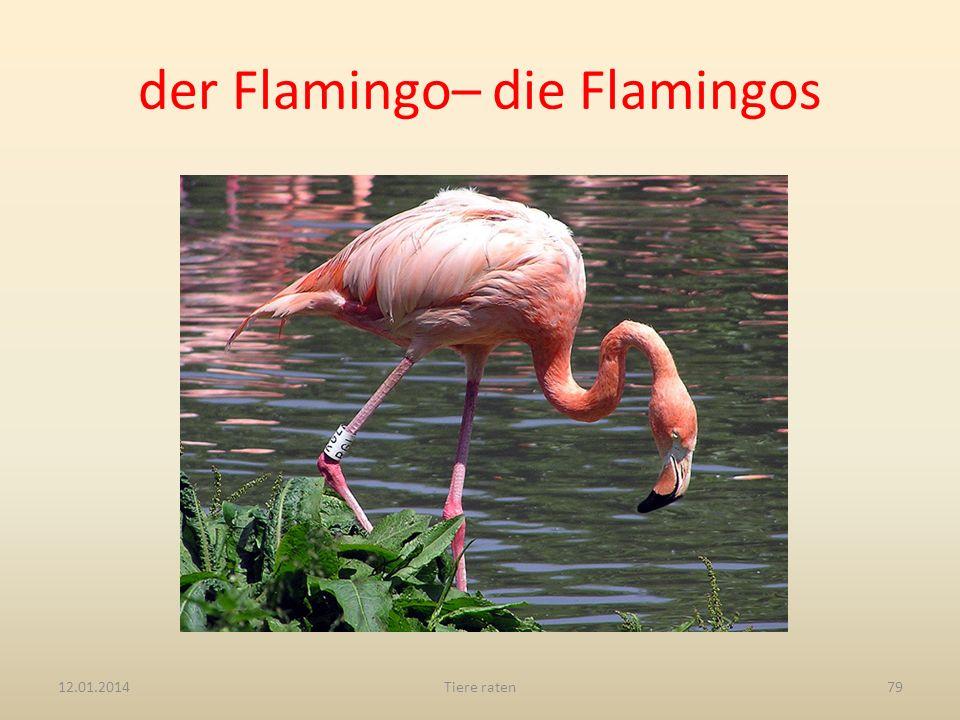 der Flamingo– die Flamingos 12.01.2014Tiere raten79