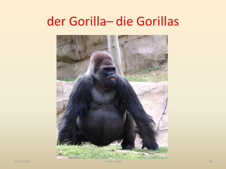 der Gorilla– die Gorillas 12.01.2014Tiere raten81