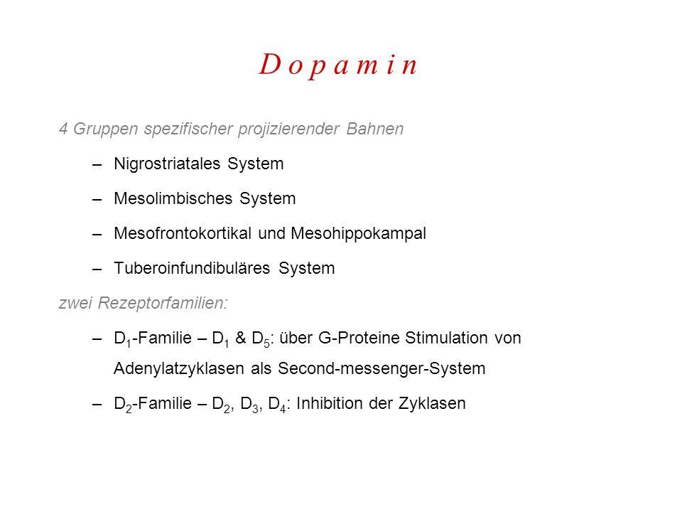 D o p a m i n 4 Gruppen spezifischer projizierender Bahnen –Nigrostriatales System –Mesolimbisches System –Mesofrontokortikal und Mesohippokampal –Tuberoinfundibuläres System zwei Rezeptorfamilien: –D 1 -Familie – D 1 & D 5 : über G-Proteine Stimulation von Adenylatzyklasen als Second-messenger-System –D 2 -Familie – D 2, D 3, D 4 : Inhibition der Zyklasen