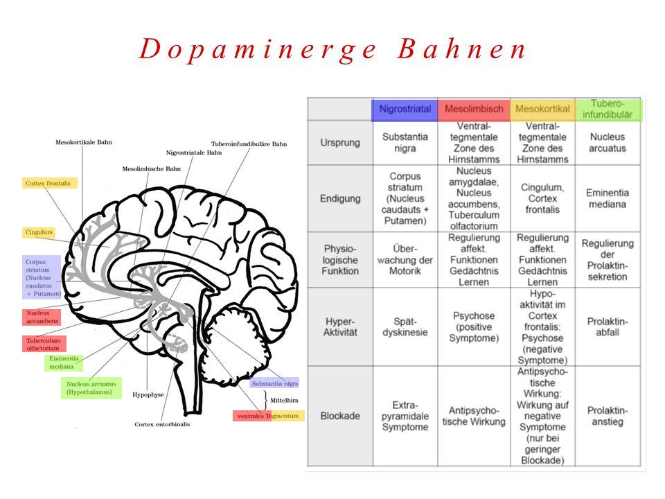 K l i n i k v o n R e z e p t o r b l o c k a d e n D 2 -Rezeptorblockade - antipsychotischer Effekt, EPS wenn nigrostriatal - sexuelle Funktionsstörungen, Prolaktinanstieg Serotonin 5-HT 2A - Rezeptorblockade - leichte Sedierung, vermehrt Tiefschlafphasen - Verbesserung der Negativsymptomatik .