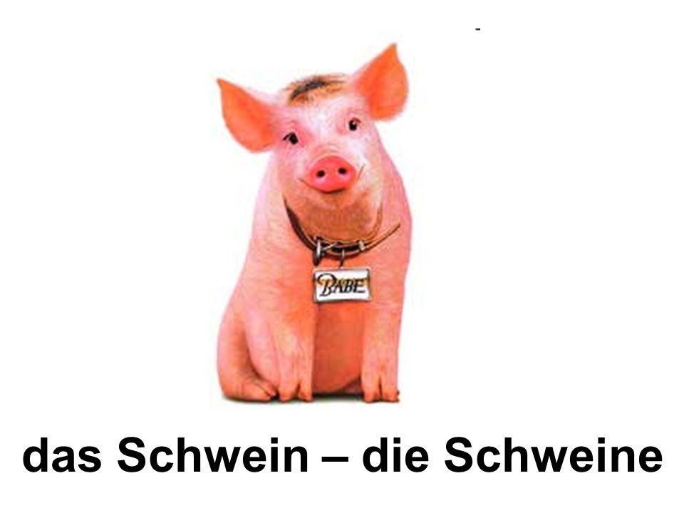 das Schwein – die Schweine