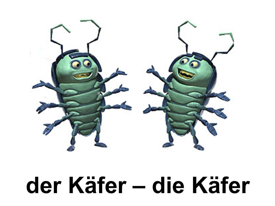 der Käfer – die Käfer