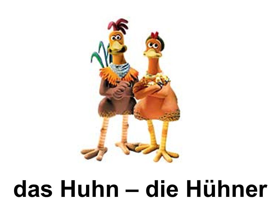 das Huhn – die Hühner