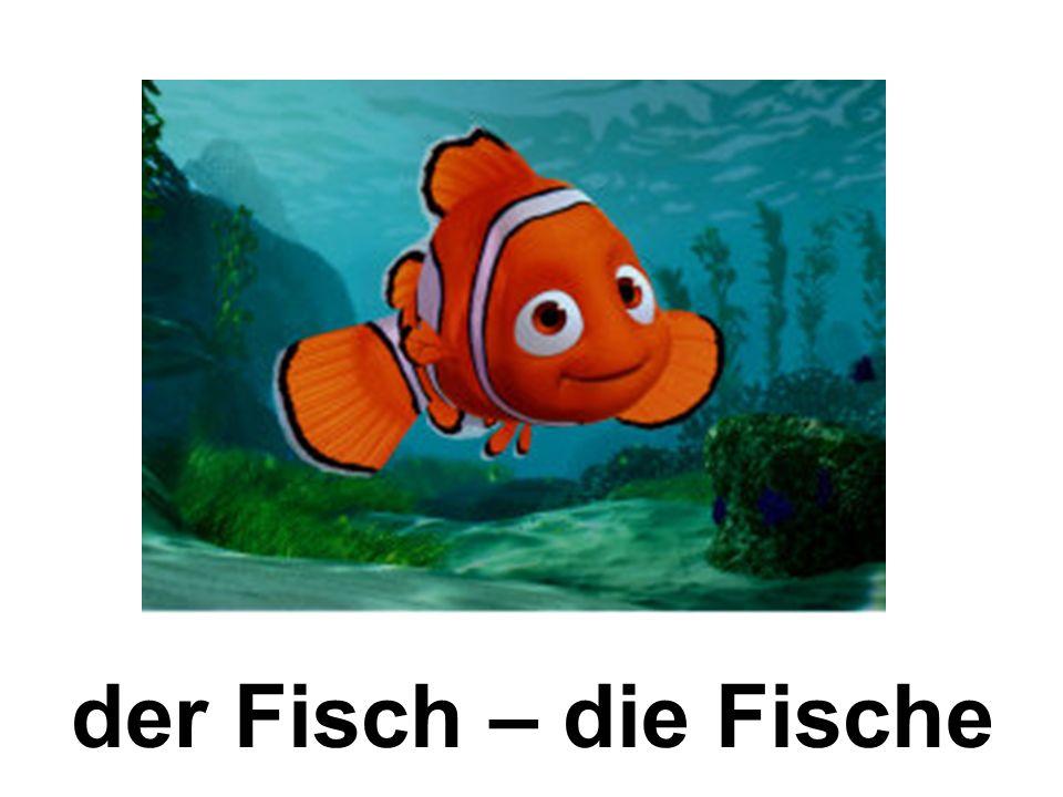 der Fisch – die Fische