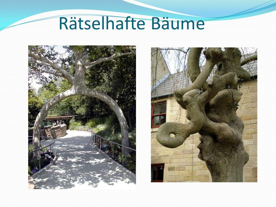 Rätselhafte Bäume
