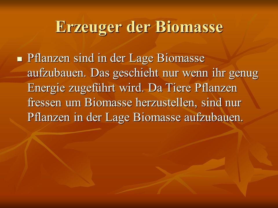 Erzeuger der Biomasse Pflanzen sind in der Lage Biomasse aufzubauen. Das geschieht nur wenn ihr genug Energie zugeführt wird. Da Tiere Pflanzen fresse