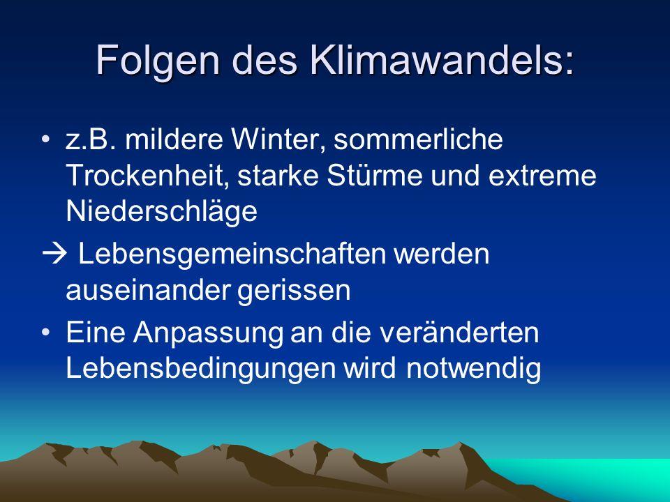Folgen des Klimawandels: z.B. mildere Winter, sommerliche Trockenheit, starke Stürme und extreme Niederschläge Lebensgemeinschaften werden auseinander