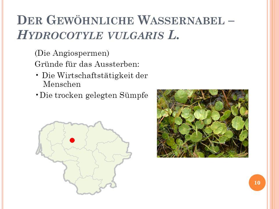 D ER G EWÖHNLICHE W ASSERNABEL – H YDROCOTYLE VULGARIS L.