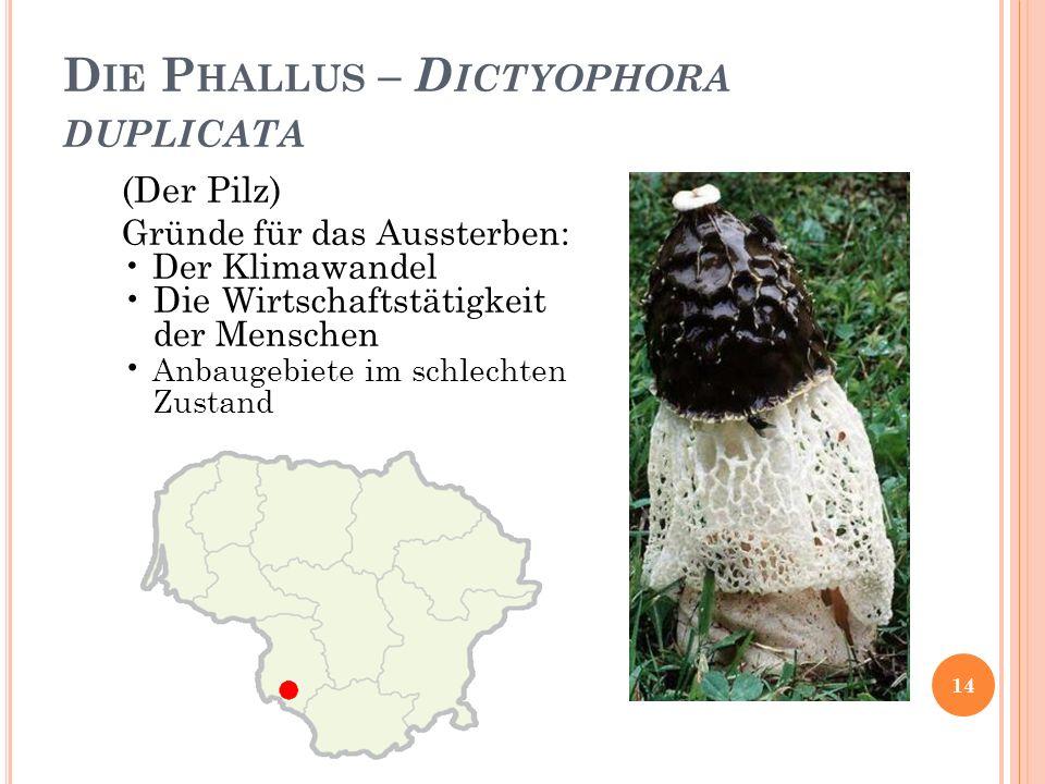 D IE P HALLUS – D ICTYOPHORA DUPLICATA (Der Pilz) Gründe für das Aussterben: Der Klimawandel Die Wirtschaftstätigkeit der Menschen Anbaugebiete im schlechten Zustand 14