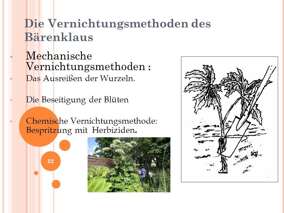 Die Vernichtungsmethoden des Bärenklaus Mechanische Vernichtungsmethoden : Das Ausreißen der Wurzeln.