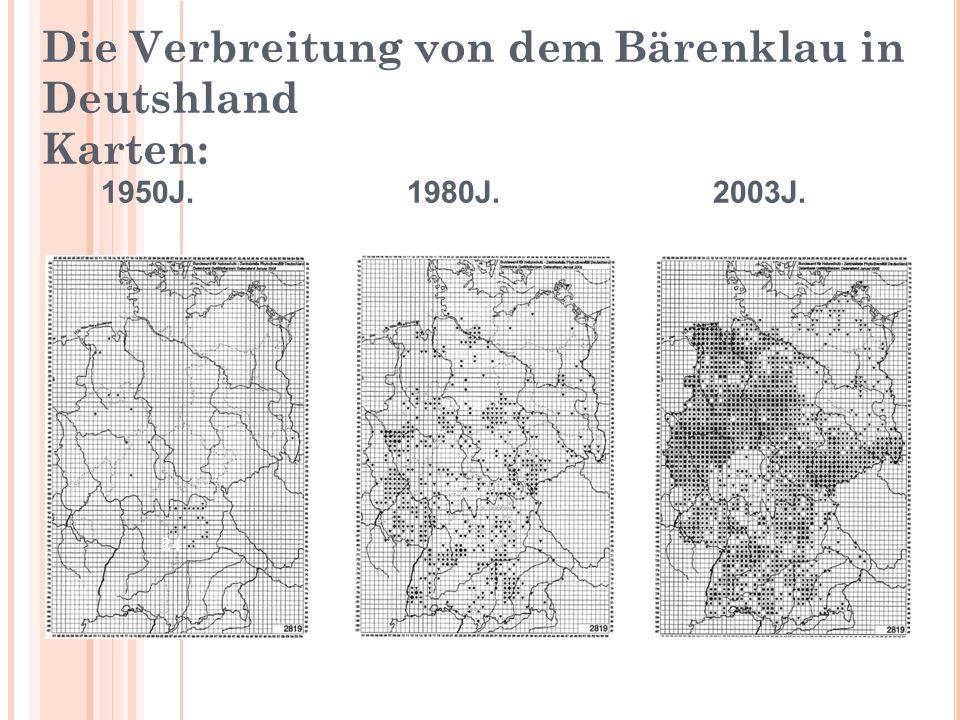 Die Verbreitung von dem Bärenklau in Deutshland Karten: 1950J. 1980J. 2003J. 24