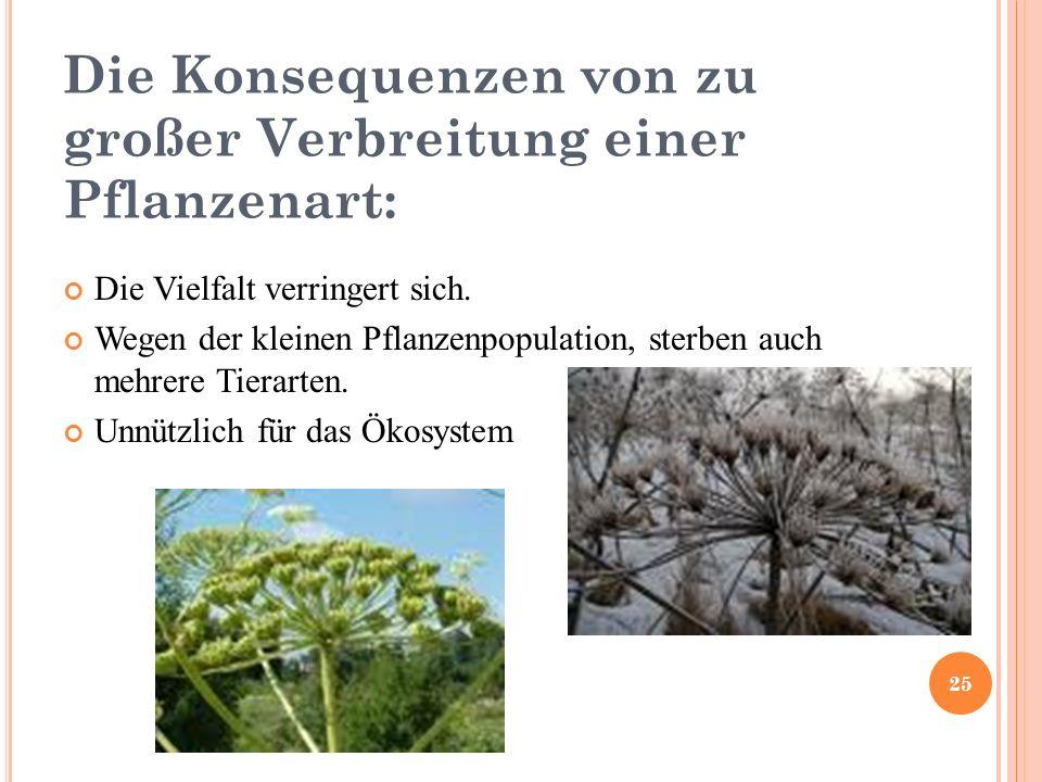 Die Konsequenzen von zu großer Verbreitung einer Pflanzenart: Die Vielfalt verringert sich.