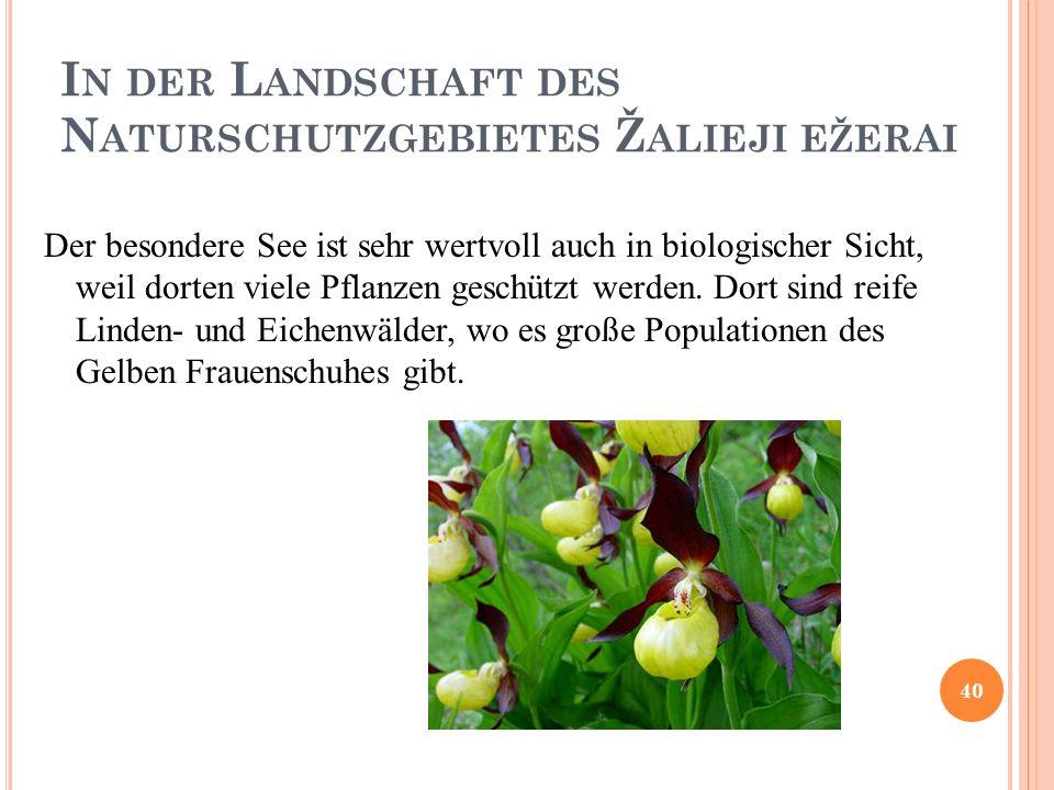 I N DER L ANDSCHAFT DES N ATURSCHUTZGEBIETES Ž ALIEJI EŽERAI Der besondere See ist sehr wertvoll auch in biologischer Sicht, weil dorten viele Pflanzen geschützt werden.