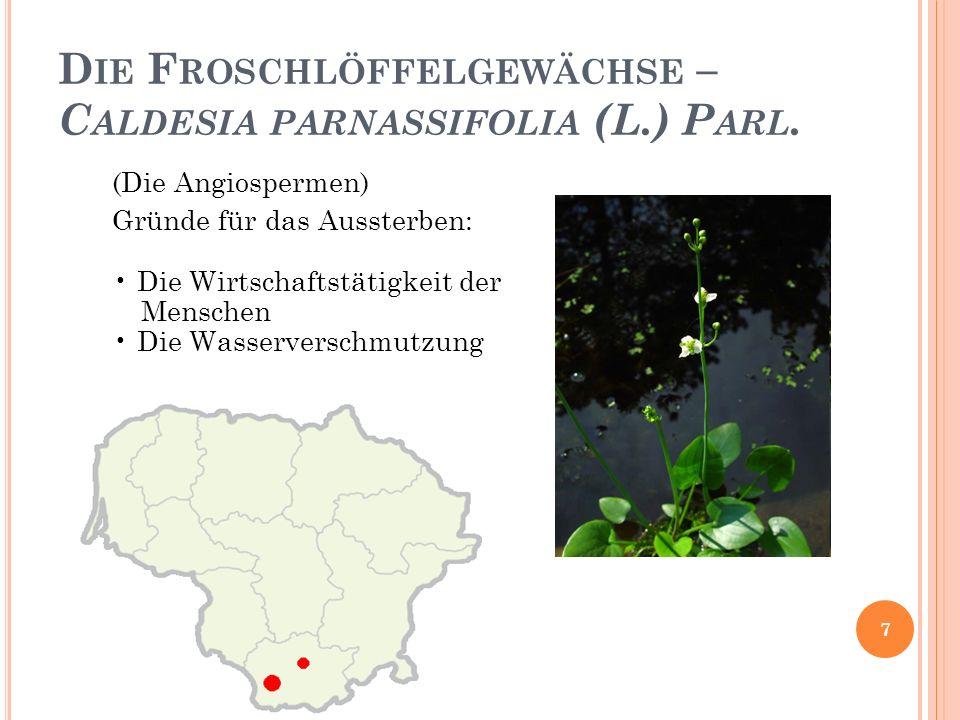 D IE F ROSCHLÖFFELGEWÄCHSE – C ALDESIA PARNASSIFOLIA (L.) P ARL.