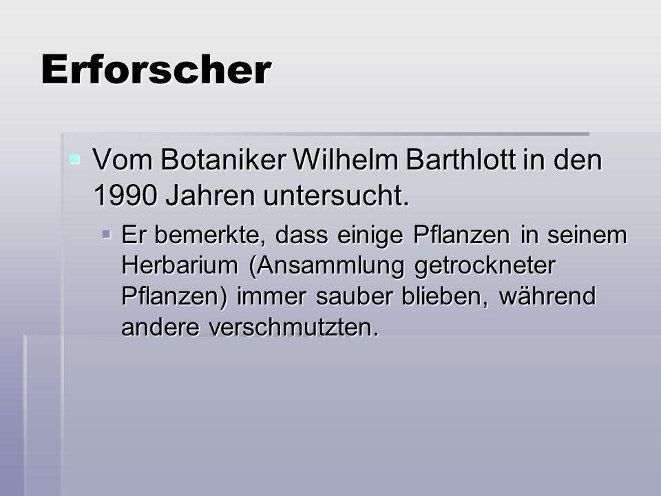 Erforscher Vom Botaniker Wilhelm Barthlott in den 1990 Jahren untersucht. Vom Botaniker Wilhelm Barthlott in den 1990 Jahren untersucht. Er bemerkte,