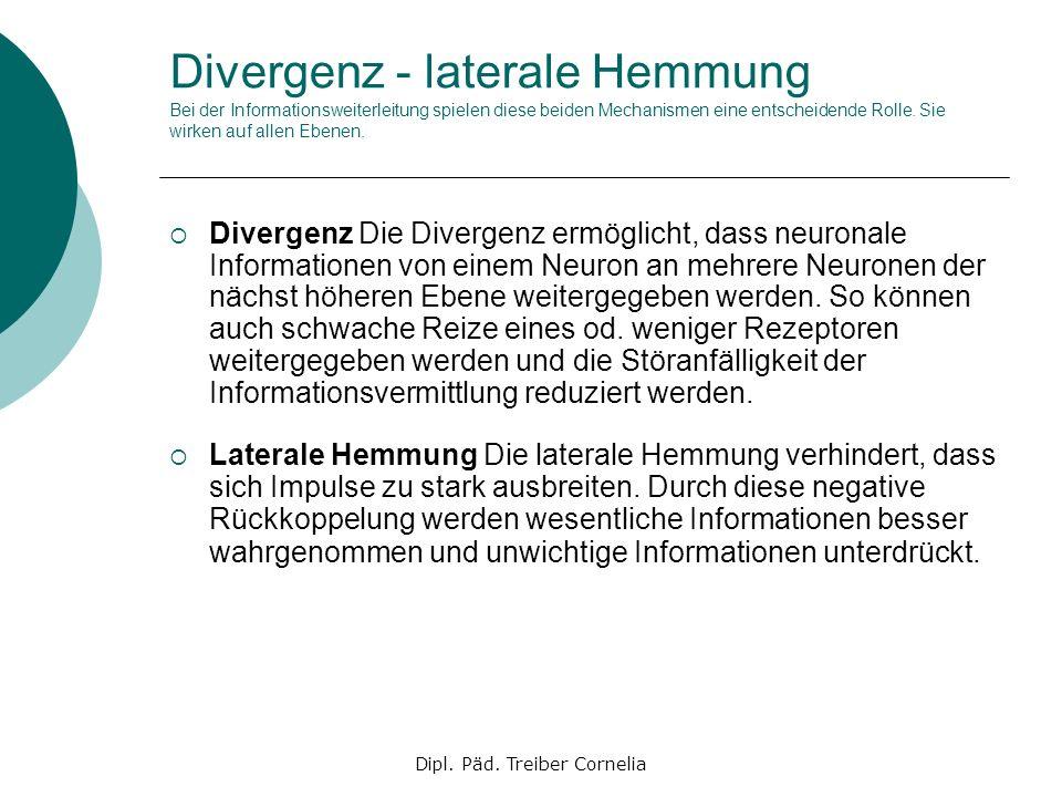 Dipl. Päd. Treiber Cornelia Divergenz - laterale Hemmung Bei der Informationsweiterleitung spielen diese beiden Mechanismen eine entscheidende Rolle.