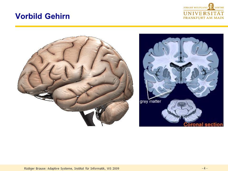 Vorbild Gehirn - 4 - Rüdiger Brause: Adaptive Systeme, Institut für Informatik, WS 2009
