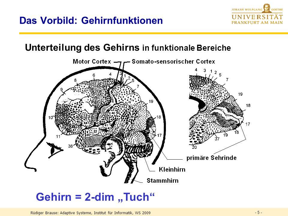 Das Vorbild: Gehirnfunktionen Unterteilung des Gehirns in funktionale Bereiche Gehirn = 2-dim Tuch - 5 - Rüdiger Brause: Adaptive Systeme, Institut für Informatik, WS 2009
