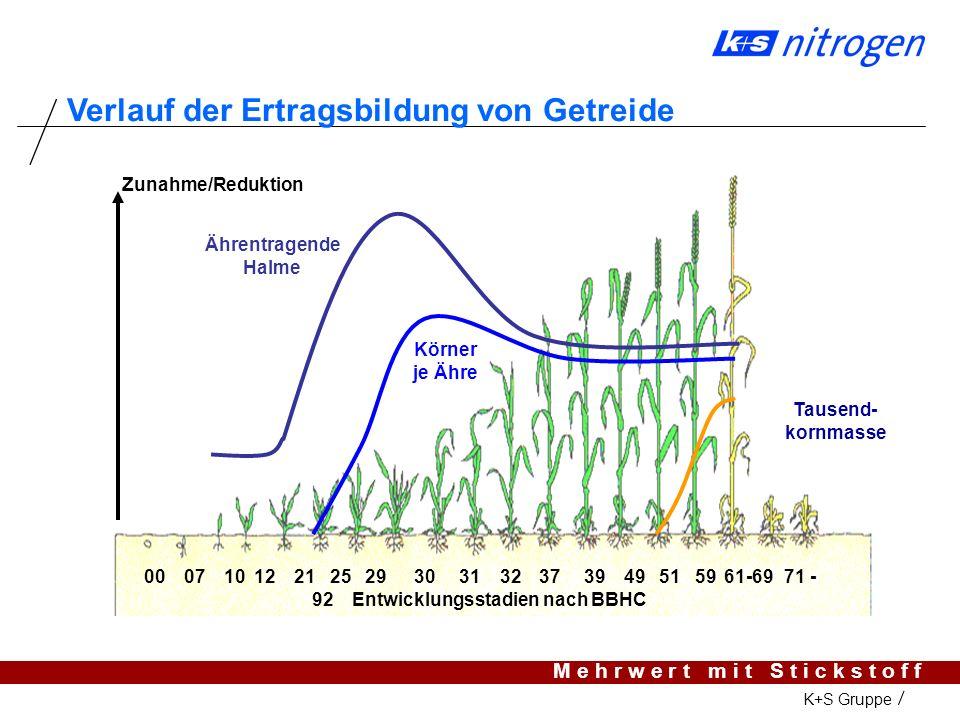 M e h r w e r t m i t S t i c k s t o f f K+S Gruppe Entwicklung der Ähre in der Weizenpflanze