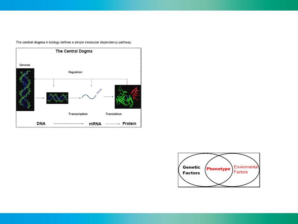 Pharmacogenetics /-genomics Linking the information on the variation of human genes to variation in clinical responses to drugs Variation in drug response Genetic factors Environmental & Biological factors Drug interactions Metabolism Transport Drug target Cell Drugs
