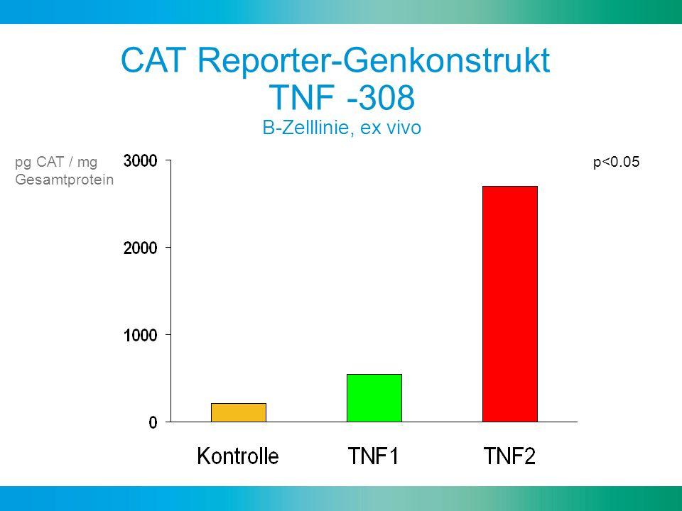 CAT Reporter-Genkonstrukt TNF -308 B-Zelllinie, ex vivo pg CAT / mg Gesamtprotein p<0.05