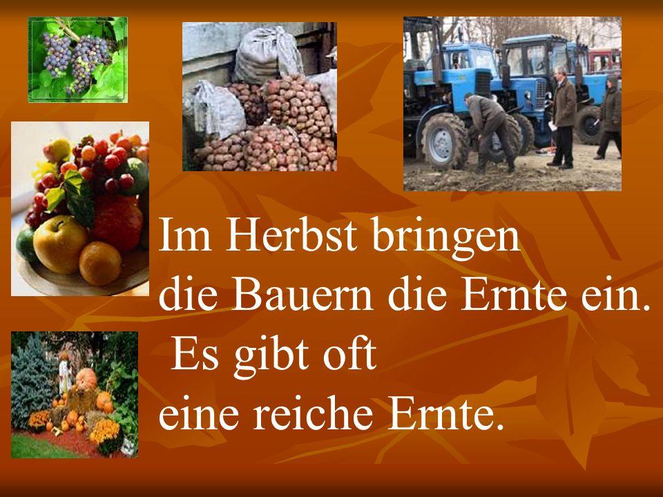 Im Herbst bringen die Bauern die Ernte ein. Es gibt oft eine reiche Ernte.