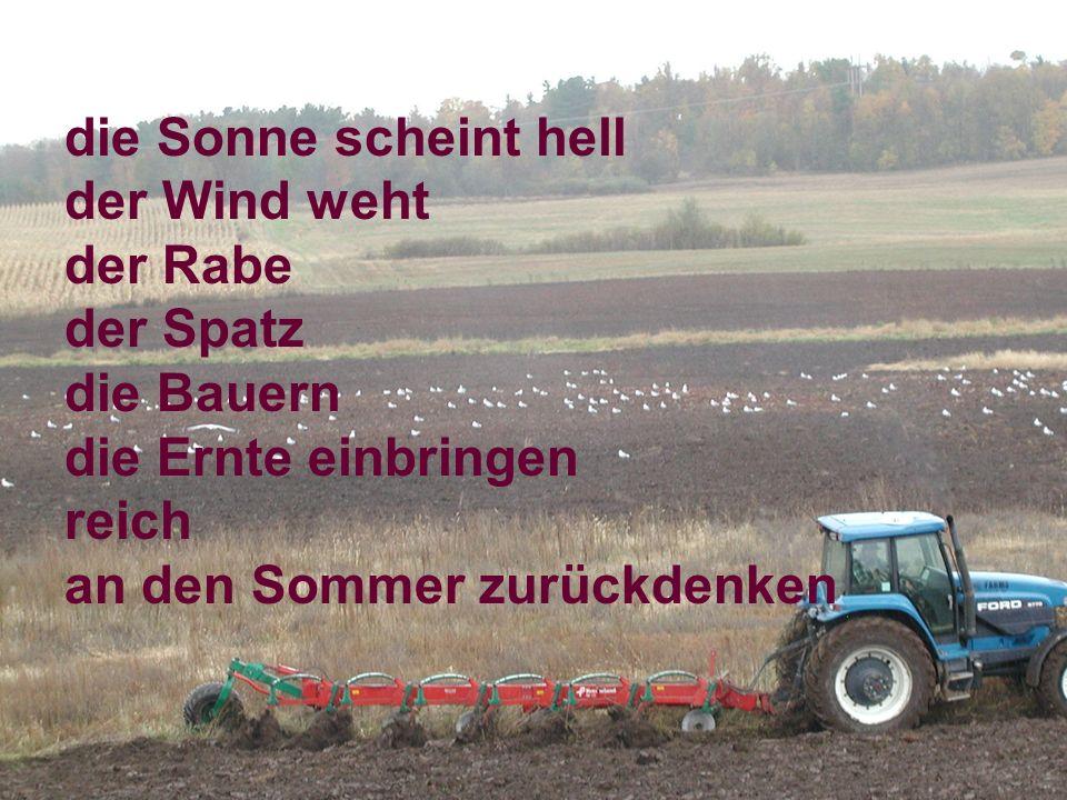 die Sonne scheint hell der Wind weht der Rabe der Spatz die Bauern die Ernte einbringen reich an den Sommer zurückdenken