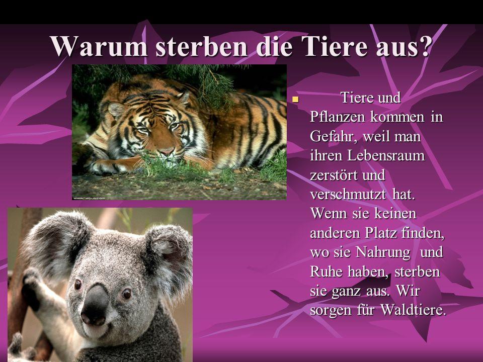 Warum sterben die Tiere aus? Tiere und Pflanzen kommen in Gefahr, weil man ihren Lebensraum zerstört und verschmutzt hat. Wenn sie keinen anderen Plat