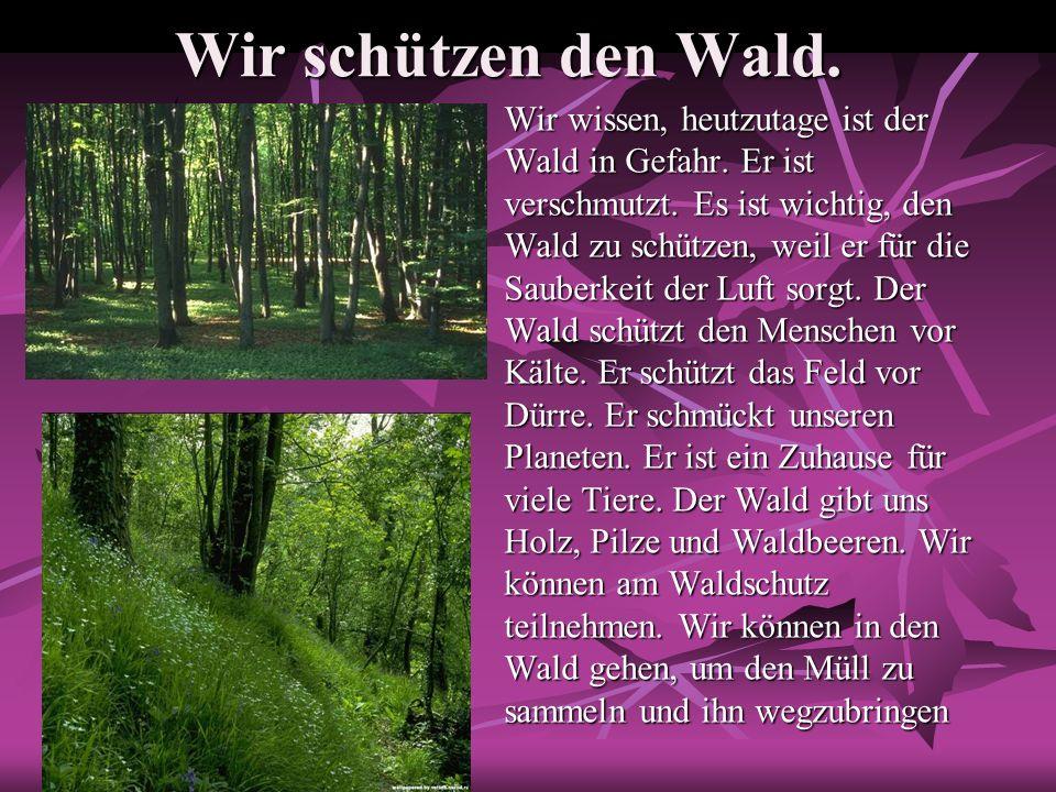 Warum ist der Wald wichtig.