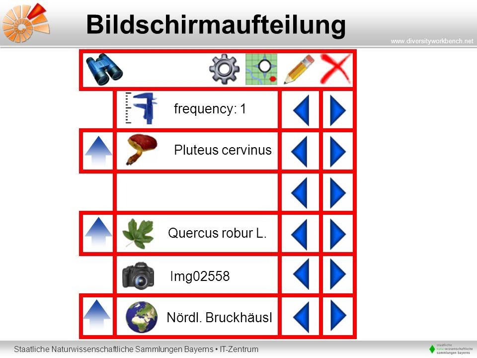 Staatliche Naturwissenschaftliche Sammlungen Bayerns IT-Zentrum www.diversityworkbench.net Bildschirmaufteilung Pluteus cervinus Nördl. Bruckhäusl Img