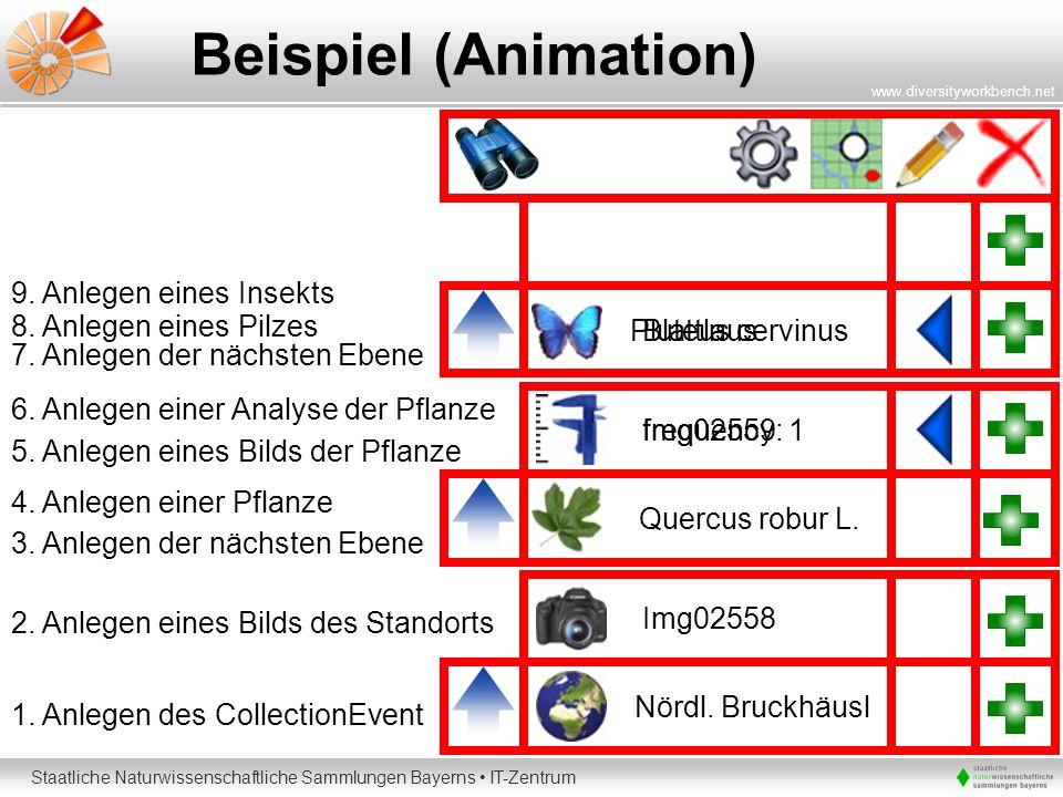 Staatliche Naturwissenschaftliche Sammlungen Bayerns IT-Zentrum www.diversityworkbench.net Beispiel (Animation) Nördl. Bruckhäusl 1. Anlegen des Colle