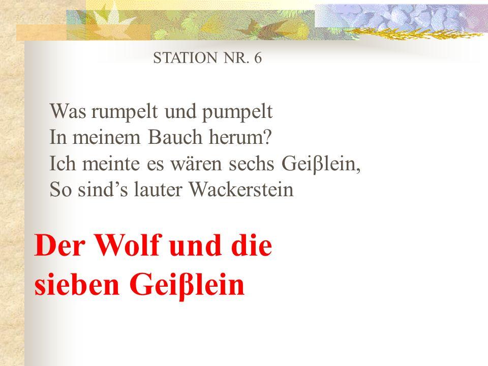 STATION NR. 6 Was rumpelt und pumpelt In meinem Bauch herum? Ich meinte es wären sechs Geiβlein, So sinds lauter Wackerstein Der Wolf und die sieben G