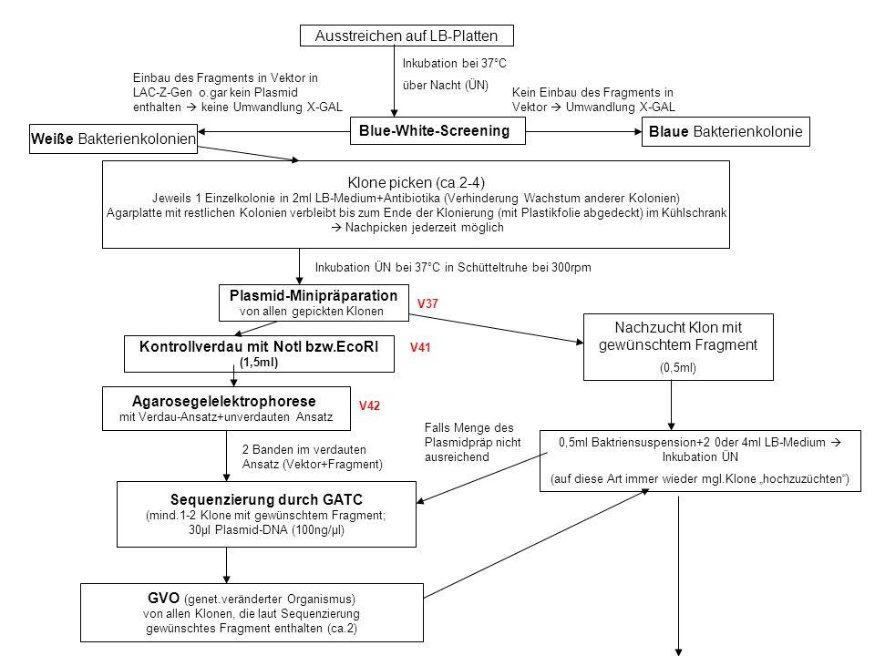 Beschichtung LightCycler-Kapillaren (Roboscreen) Quantitative PCR m.Light Cycler