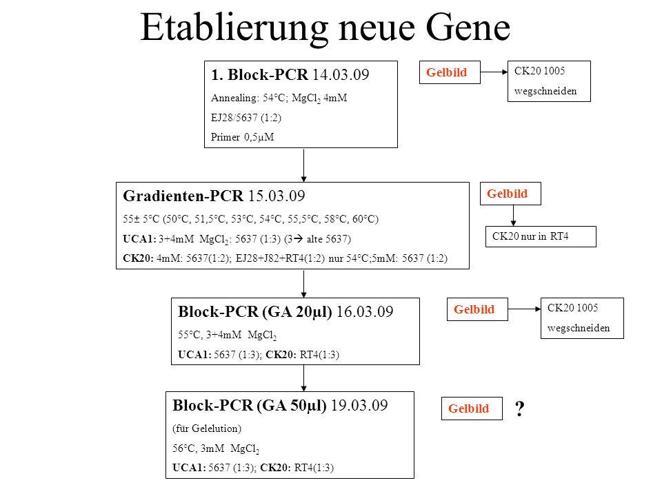 Gelelution, Ligation, Transformation, Ausplattieren Plasmidpräp und DNA-Konz.-Bestimmung (Photometer) CK20: 148+163ng/µl 5µl UCA1: 28+20+65/ 128ng/µl 7,9/ 5µl Kontrollverdau 29.03.07 (NotI, PK DE-A) Klone picken Gelbild Nicht geklappt, nur PK Agilent (DNA) 18.04.07 ??.