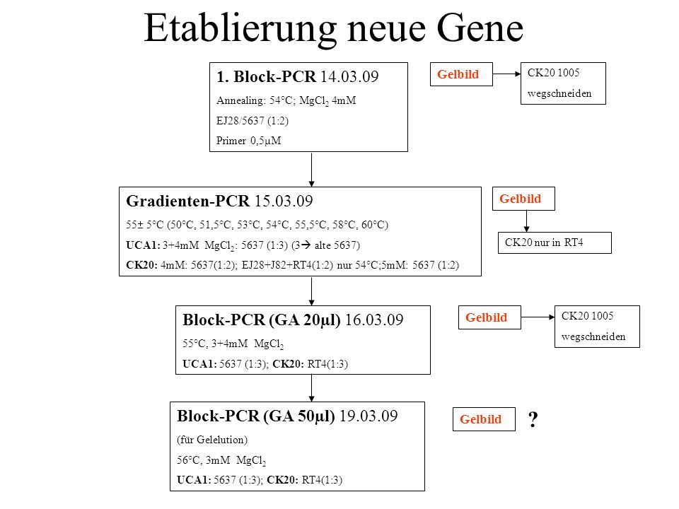 Etablierung neue Gene 1. Block-PCR 14.03.09 Annealing: 54°C; MgCl 2 4mM EJ28/5637 (1:2) Primer 0,5µM Gelbild Gradienten-PCR 15.03.09 55 5°C (50°C, 51,