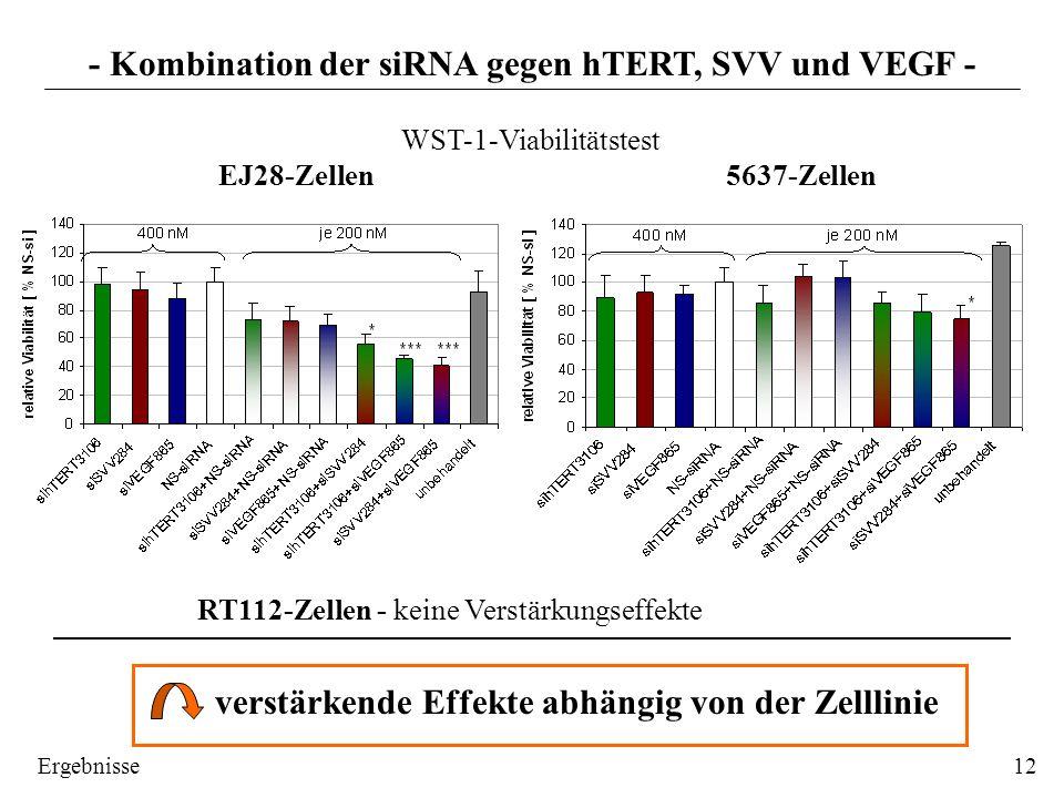 - Kombination der siRNA gegen hTERT, SVV und VEGF - WST-1-Viabilitätstest EJ28-Zellen 5637-Zellen 12 RT112-Zellen - keine Verstärkungseffekte verstärk