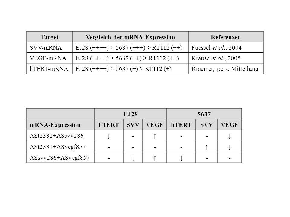 TargetVergleich der mRNA-ExpressionReferenzen SVV-mRNAEJ28 (++++) > 5637 (+++) > RT112 (++)Fuessel et al., 2004 VEGF-mRNAEJ28 (++++) > 5637 (++) > RT1