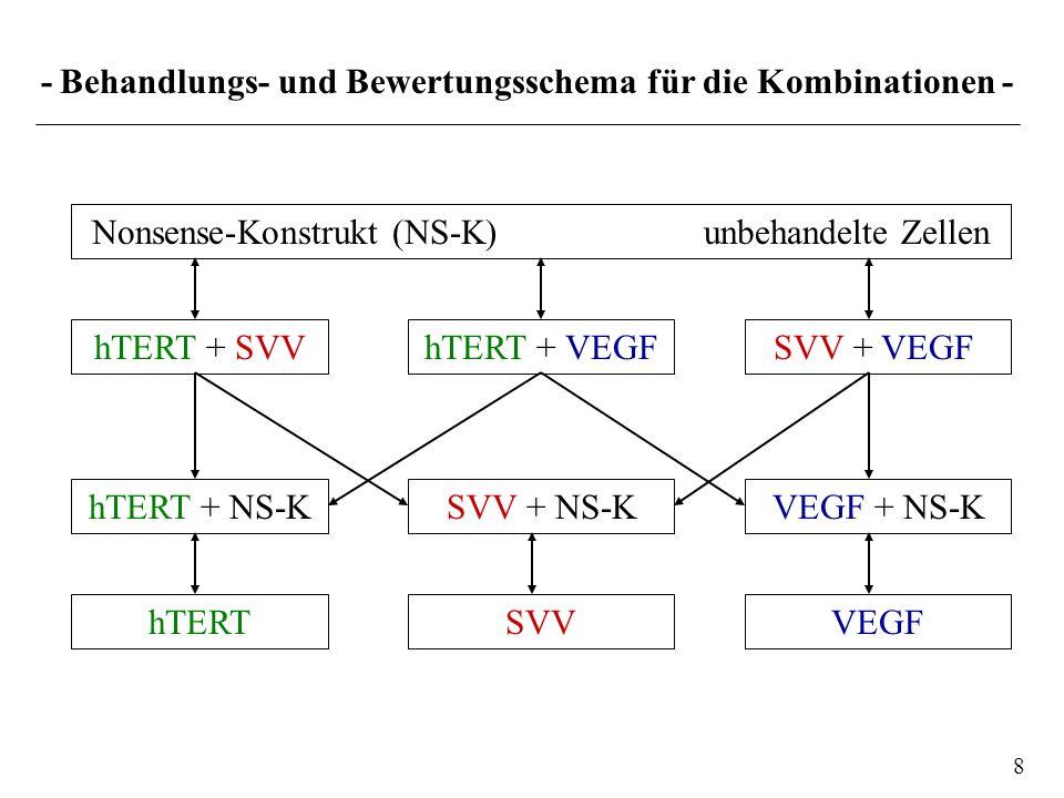 - Behandlungs- und Bewertungsschema für die Kombinationen - SVV + VEGF VEGF + NS-K Nonsense-Konstrukt (NS-K) unbehandelte Zellen 8 hTERT + VEGF SVV +