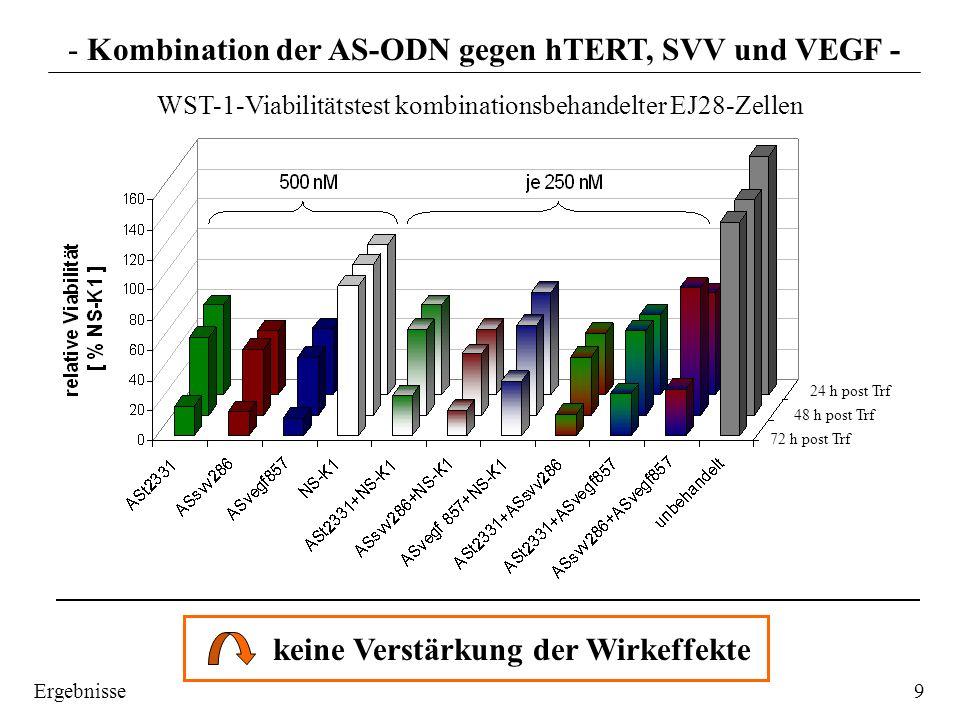 Apoptoseraten Zellzahl Langzeitproliferation Zellzyklusverteilung EJ28 - Kombination der AS-ODN gegen hTERT, SVV und VEGF - BehandlungGesamtapoptose ASt2331 33,0 % ASsvv286 21,3 % ASvegf857 30,9 % NS-K1 12,1 % ASt2331 + NS-K1 30,1 % ASsvv286 + NS-K1 24,0 % Asvegf + NS-K1 24,8 % ASt2331 + ASsvv286 29,3 % ASt2331 + ASvegf857 27,4 % ASsvv286 + ASvegf857 24,1 % unbehandelte Zellen 7,1 % keine zunehmenden antiproliferativen Effekte in keiner der beiden Zelllinien bei keiner Methodik zweite Zelllinie (5637) 10Ergebnisse