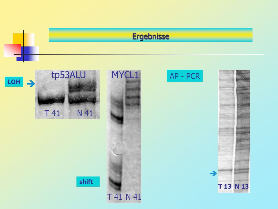 Ergebnisse tp53ALU T 41N 41 MYCL1 T 41N 41 LOH AP - PCR N 13T 13 shift
