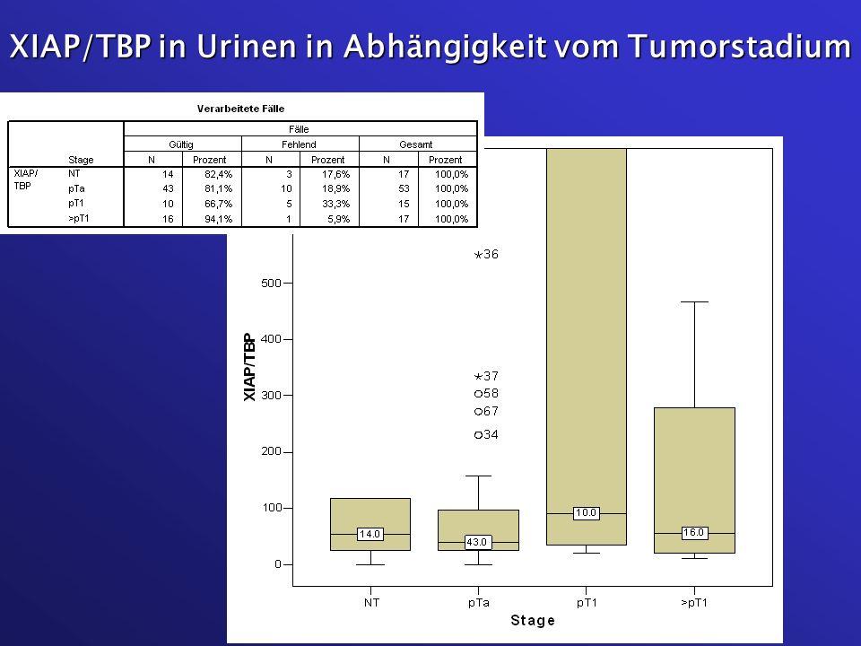 XIAP/TBP in Urinen in Abhängigkeit vom Tumorstadium