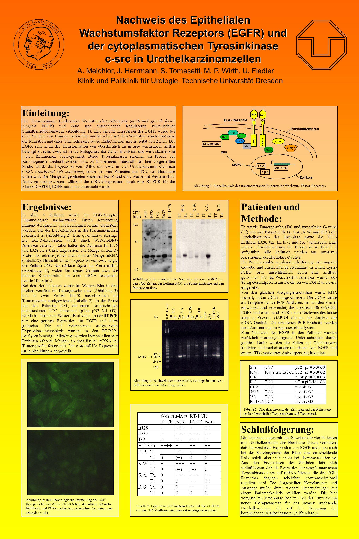 Nachweis des Epithelialen Wachstumsfaktor Rezeptors (EGFR) und der cytoplasmatischen Tyrosinkinase c-src in Urothelkarzinomzellen A. Melchior, J. Herr