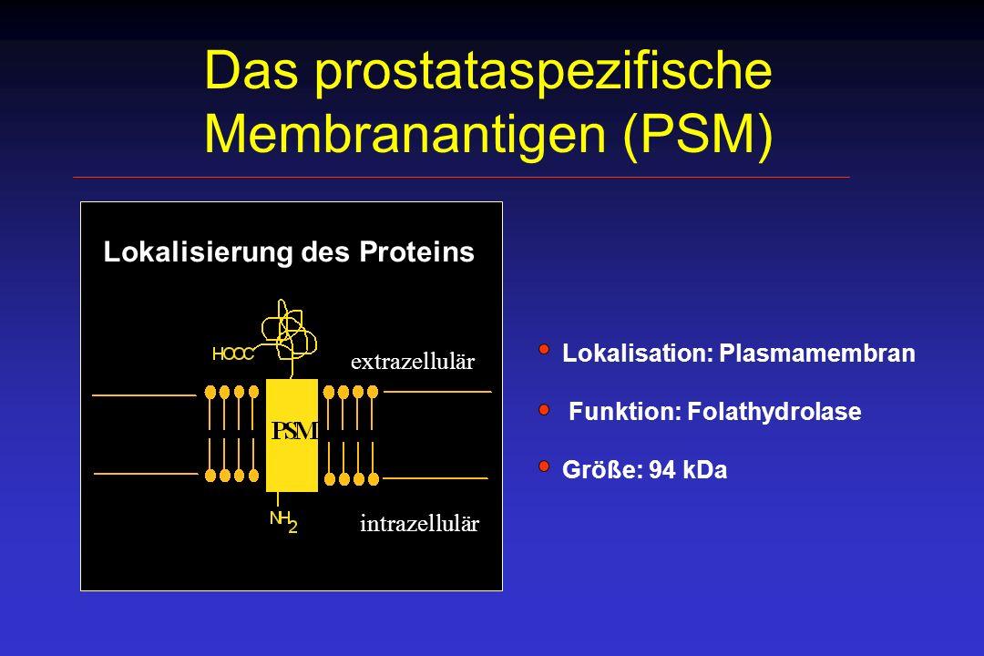 PSM-Gen und Transkripte PSM 2387 bp (Su et al., 1995) X PSM - 2653 bp (Israeli et al., 1993) PSM-Variante (Bzdega et al., 1997) X Deletion von Exon 18 (657-688) Deletion im Exon 1 (114-380) Chromosom 11 PSM-Gen 19 Exons, 20 Introns PSM mRNA 2653 bp