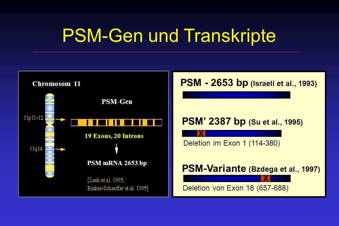 Patientenkollektiv 60 PCa-Patienten (232 Lymphknoten) 16 hormonell vorbehandelt 17 pTN1 32 pT2N0 8 pT3N0 3 pT4N0 3 Patienten mit Nieren bzw.