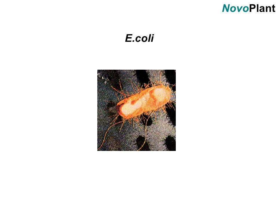 NovoPlant E.coli