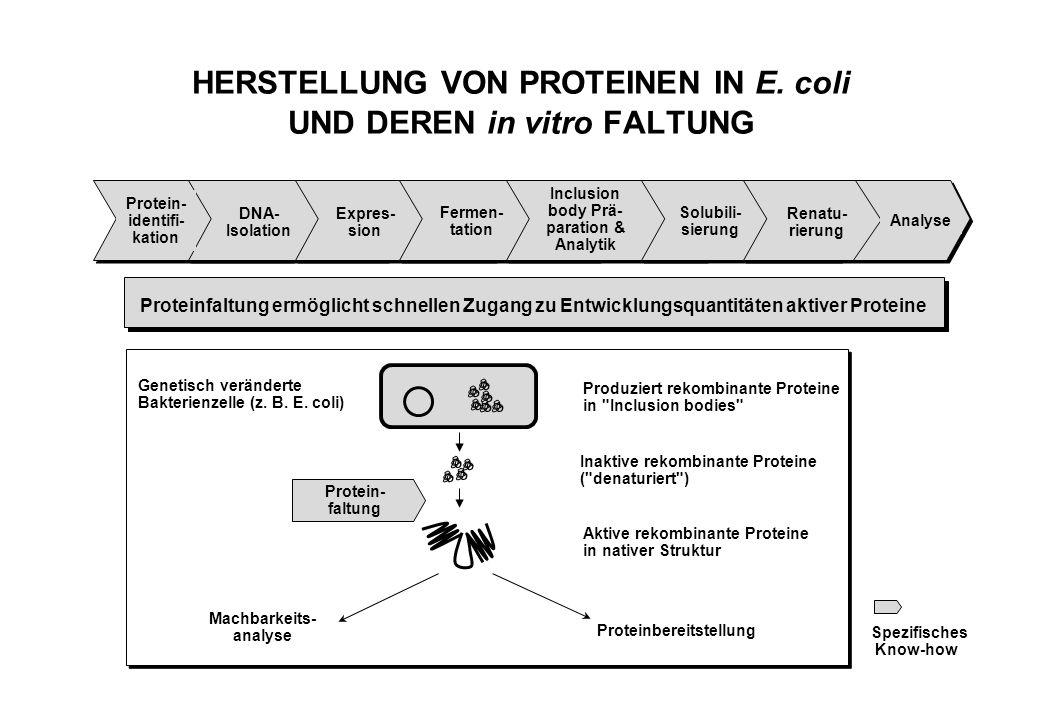 HERSTELLUNG VON PROTEINEN IN E.