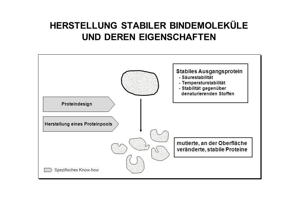 SCREENING UND SELEKTION VON BINDEMOLEKÜLEN MIT DEM PHAGE DISPLAY SYSTEM Selektion der Proteine durch spezifische BIndung Isolierung der spezifischen Bindeproteine und Produktion in E.