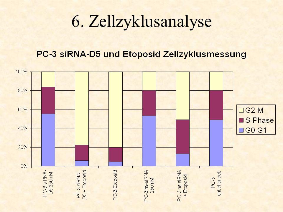 6. Zellzyklusanalyse