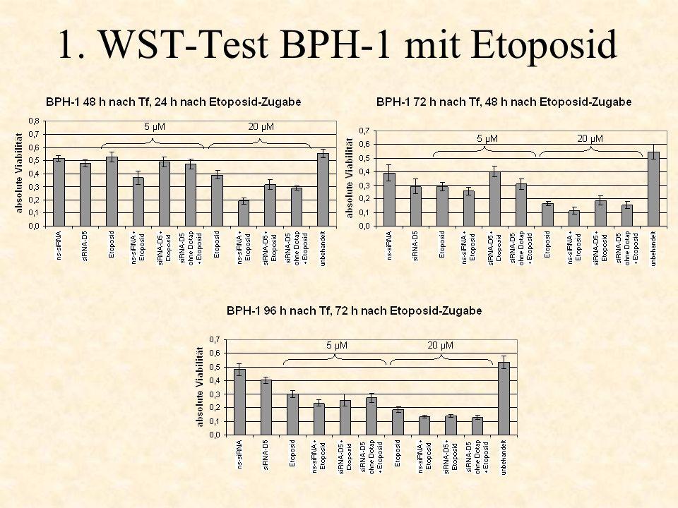 1. WST-Test BPH-1 mit Etoposid