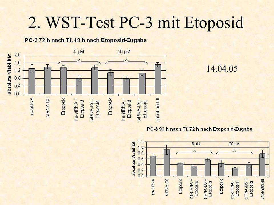 2. WST-Test PC-3 mit Etoposid 14.04.05